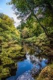 Strid de rivière près d'abbaye de Bolton dans Yorkshire, Angleterre Images libres de droits