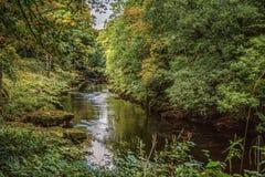 Strid del río cerca de la abadía de Bolton en Yorkshire, Inglaterra Imágenes de archivo libres de regalías