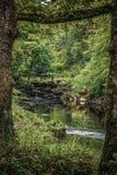 Strid del río cerca de la abadía de Bolton en Yorkshire, Inglaterra Imagen de archivo libre de regalías