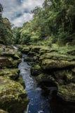 Strid del río cerca de la abadía de Bolton en Yorkshire, Inglaterra Imagenes de archivo
