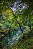 Strid del río cerca de la abadía de Bolton en Yorkshire, Inglaterra Fotos de archivo libres de regalías