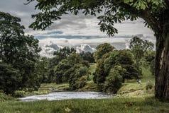 Strid del río cerca de la abadía de Bolton en Yorkshire, Inglaterra Imagen de archivo
