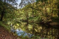 Strid del río cerca de la abadía de Bolton en Yorkshire, Inglaterra Foto de archivo libre de regalías