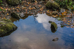 Strid del río cerca de la abadía de Bolton en Yorkshire, Inglaterra Fotografía de archivo