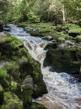 The strid. The famous Strid waterfall caused by the narrow gorge of the river Wharfe at Bolton Abbey estate, shipton, yorkshire, UK Royalty Free Stock Images