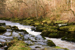 The Strid in strid wood. Near Bolton Abbey in North Yorkshire Royalty Free Stock Images