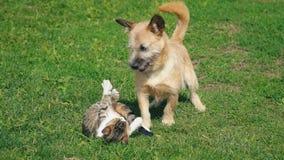 Striden av en hund och en katt lager videofilmer