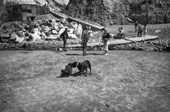 Stridighethundkapplöpning på stranden arkivbild