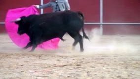 Stridighettjurbild från Spanien. svart tjur arkivfilmer