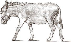Striding donkey Stock Photos