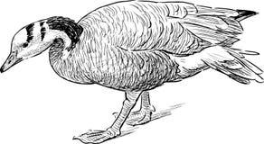 Striding goose Royalty Free Stock Photo
