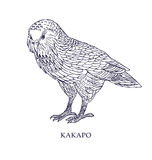 Strigops habroptila - Kakapo, ugglapapegoja Vektorillustration, fågel med beskyddstatus Arkivbilder