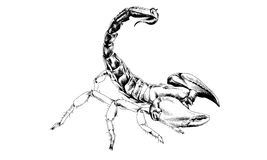 Striker Scorpion with a poisonous sting drawn in ink by hand Royalty Free Stock Photos