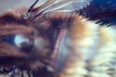 Striking crazy eyes of an insect and the insect wing. Blurred royalty free stock images