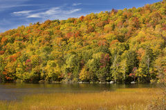 Striking fall foliage on hillside, Russell Pond, Lincoln, New Ha. Dramatic fall foliage of red maples and yellow birches on hillside along shore of Russell Pond Royalty Free Stock Photo