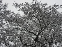 Scenic tree covered with fresh snow stock images