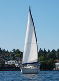 Striking White Sailboat on Lake Union royalty free stock photos