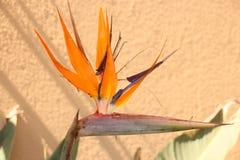 Strilitsia. Vloois nest restaurant Namibia Stock Image
