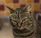Strimmig katt djupt i tanke. arkivfoton