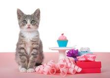 Strimmig kattfödelsedagkattunge med muffin på sockel royaltyfria foton