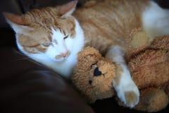 Strimmig kattkatt med nallebjörnen på soffan arkivfoton