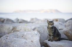 Strimmig kattkatt på kusten Arkivbilder