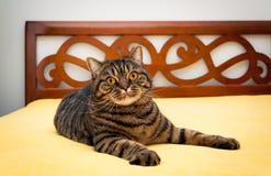 Strimmig kattkatt på säng Royaltyfria Bilder