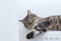 Strimmig kattkatt som överst ligger av ett element fotografering för bildbyråer