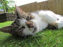 Strimmig kattkatt som ner lägger royaltyfria foton