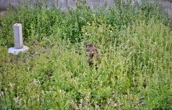 Strimmig kattkatt som omges av gräs royaltyfri foto