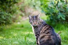 Strimmig kattkatt som ser in mot kamera Arkivbilder
