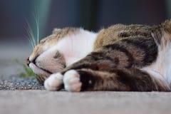 Strimmig kattkatt som sover på hans sida Arkivfoton