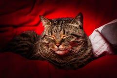 Strimmig kattkatt som sover på rött royaltyfri bild