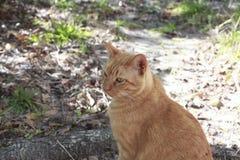 Strimmig kattkatt utanför Royaltyfri Foto