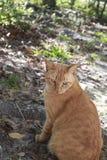 Strimmig kattkatt utanför Fotografering för Bildbyråer