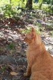 Strimmig kattkatt utanför Arkivfoton