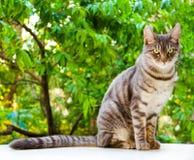 Strimmig kattkatten sitter Arkivbilder