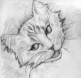 Strimmig kattkatten skissar Royaltyfri Bild