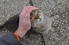 Strimmig kattkatten tycker om smekning vid en manhand arkivfoto