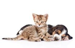 Strimmig kattkattunge och sova valpen för bassethund som tillsammans ligger isolerat royaltyfri bild