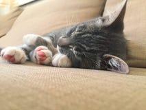 Strimmig kattkattunge som har en ta sig en tupplur Royaltyfri Fotografi