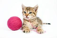 Strimmig kattkattunge som spelar med ett garnnystan Arkivbilder