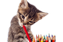 Strimmig kattkattunge som tuggar den röda blyertspennan Royaltyfri Foto