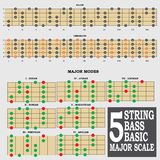 5 string bass basic major scale for bass player te Stock Image