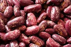 String bean Royalty Free Stock Photos