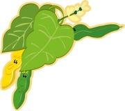 String bean. Vector illustration of the string bean royalty free illustration
