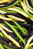 String beans. Pile of purple yellow and green string beans Royalty Free Stock Images