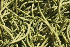 String beans Royalty Free Stock Photos