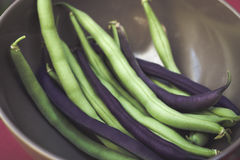 String Beans. Image of Harvested String Beans Royalty Free Stock Photography