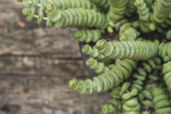 String of buttons plant close up Stock Image